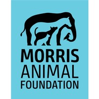 Morrison Animal Foundation
